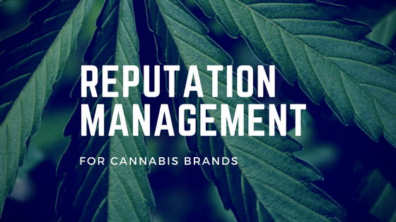 reputation management for cannabis brands
